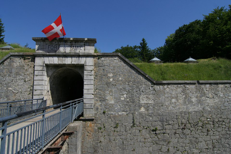 tamie fort